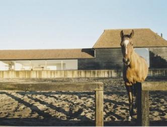 tilty-barn-horse
